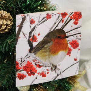 'Robin in Berries' Christmas Card