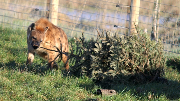 Animals at Yorkshire wildlife park enjoy special festive treat thanks to Bluebell Wood